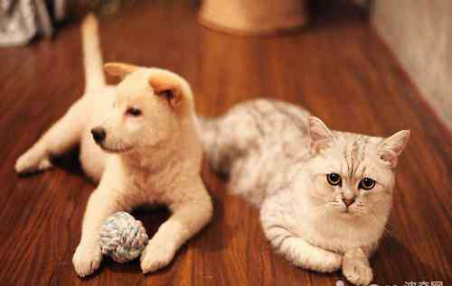 怎么让猫喜欢你 如何让猫咪喜欢你的怀抱