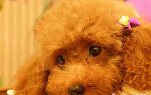 上海宠物寄养 家庭式宠物寄养和宠物店寄养有什么区别