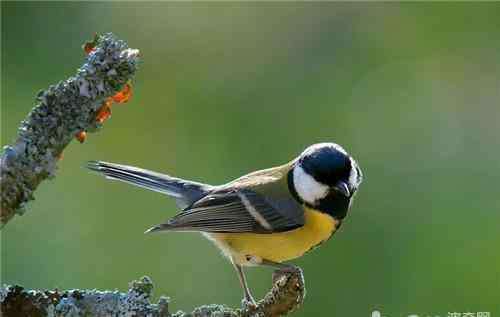 肺炎的症状有哪些 观赏鸟患肺炎的症状有哪些