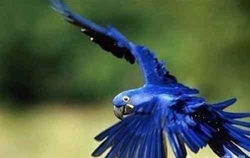 缺维生素a会得什么病 鹦鹉缺乏维生素A会有哪些影响
