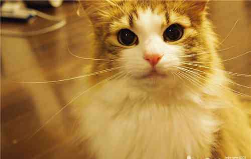 猫天使 哪类猫咪喜欢搞破坏的原因之如何制止它们