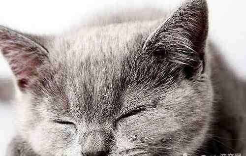 84消毒液会过敏吗 养猫误区之慎用消毒液