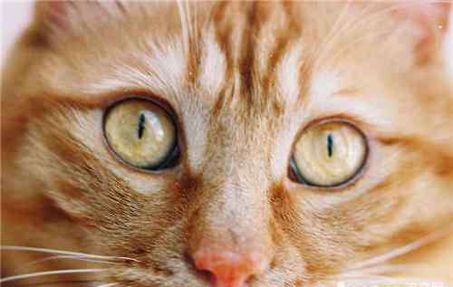 鼻子很干 是否猫咪鼻子干就意味着生病?