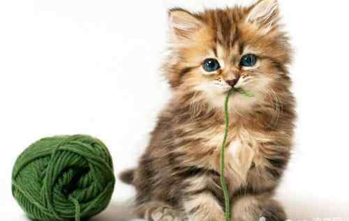 胃难受怎么办怎么缓解 猫咪胃不舒服怎么办?