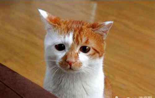 代谢性酸中毒最突出的症状是 猫咪的代谢性酸中毒及病例分析