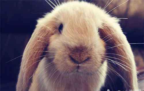 老土方治拉肚子 几个治疗兔子拉稀的小偏方