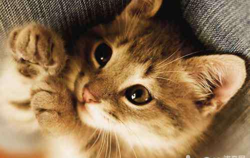 痉挛抽搐 猫咪为什么会痉挛