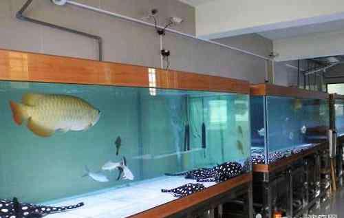 鱼缸尺寸 魟鱼鱼缸的尺寸怎么选?