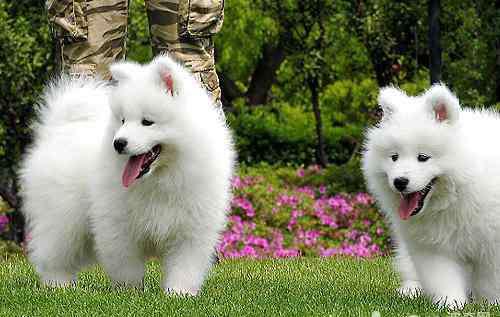 零食的种类 狗狗的零食种类有哪些