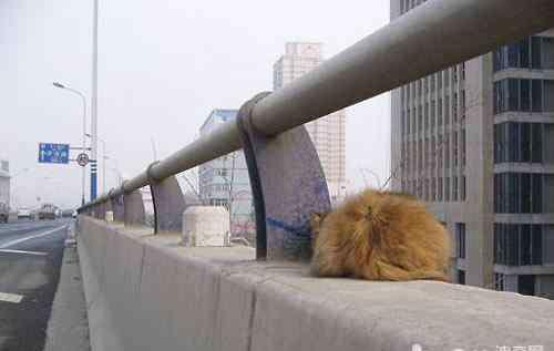 救援猫 高架猫领养,关注弱势动物救助