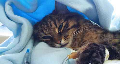感染性腹泻 猫感染性腹泻及诊疗