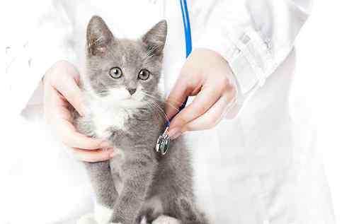 心脏听诊音 猫咪心脏听诊的基本知识
