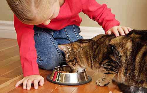 给猫咪喂益生菌的禁忌 猫咪益生菌的选择及使用