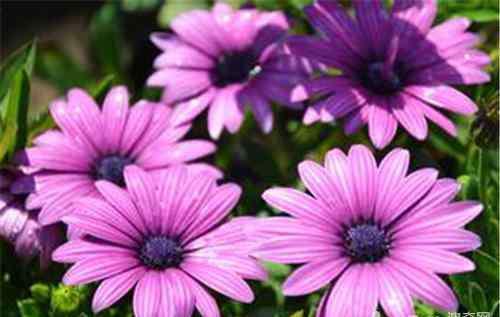 温室花卉 常见的温室花卉品种介绍