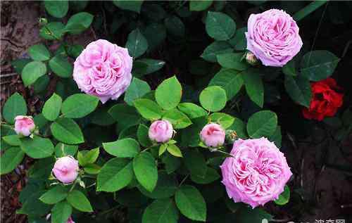 适合阳台种植的花卉 哪些花草不适合在封闭阳台上栽种