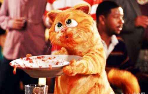 加菲猫和 加菲猫和波斯猫的关系
