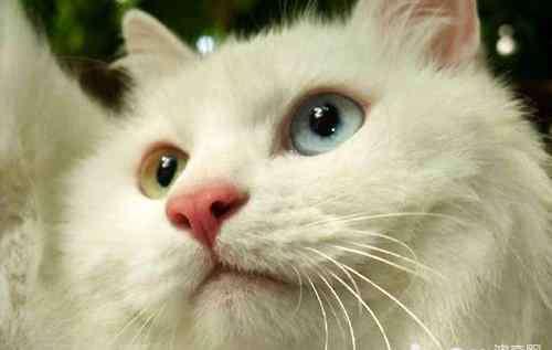 猫的胡子有什么作用 猫咪的胡须有什么作用?