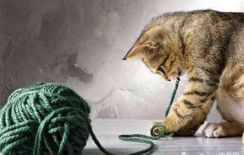 丁香鱼网络 绝对不能碰!以下猫咪的饮食禁忌你知道吗?