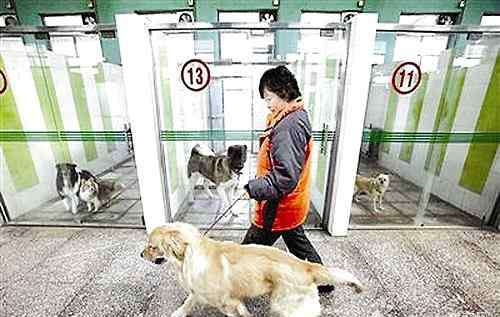 狗狗寄养多少钱一天 狗狗寄养多少钱一天