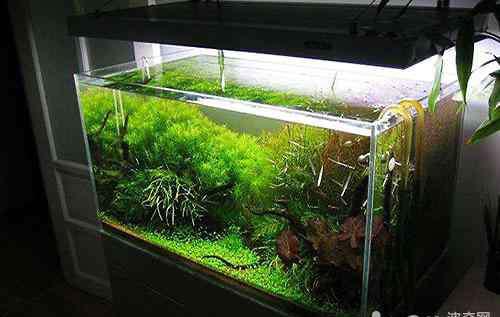 生态缸 今天来教你如何diy生态鱼缸
