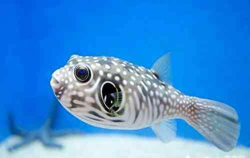 如何养鱼 如何饲养热带鱼?教你几招