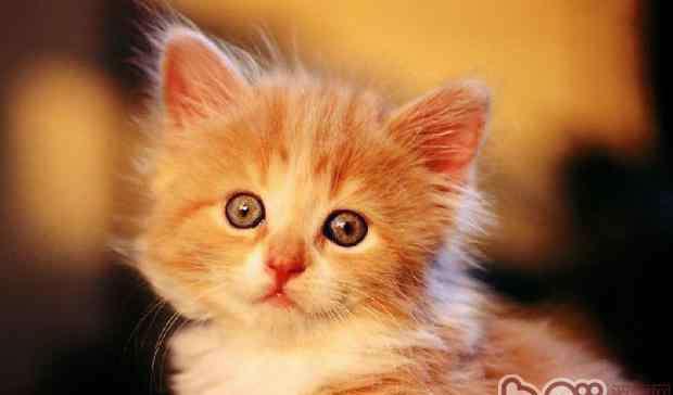猫肠胃炎 警惕!夏季猫咪易患肠胃炎