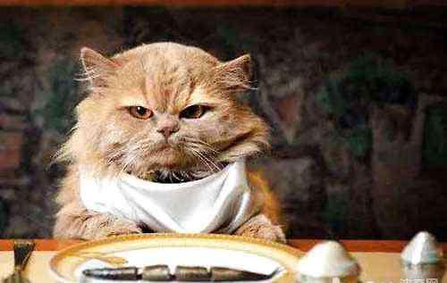 猫咪不吃东西怎么办 猫不吃东西怎么办?猫咪不吃东西的解决办法?