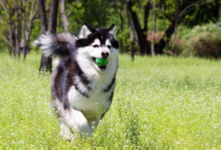 吃太咸的危害 狗狗吃太咸的坏处,狗狗吃咸的表现有哪些?