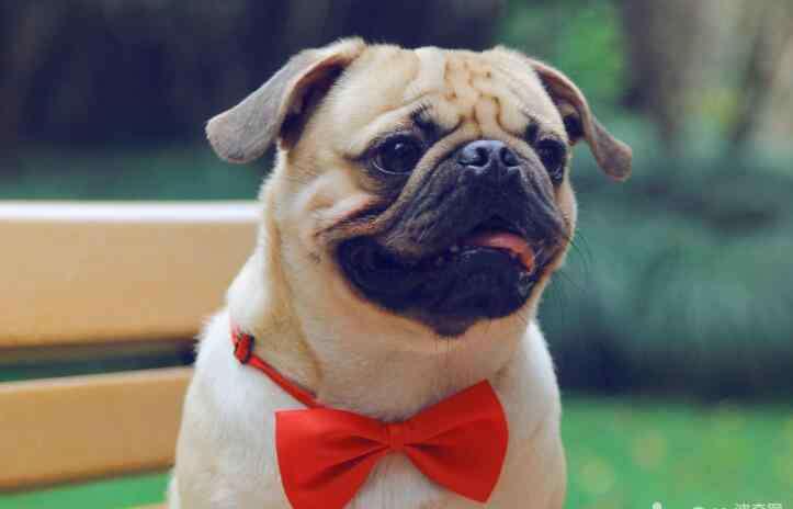 预防中暑 预防狗狗中暑的措施,狗狗中暑应该如何处理