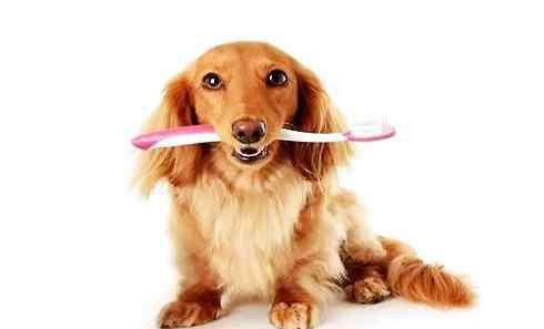 口臭怎么治 狗狗口臭怎么办狗狗口臭治疗方法