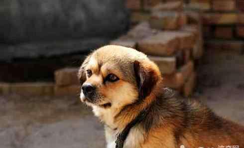 收养狗狗 狗狗领养 狗狗领养流程及注意事项