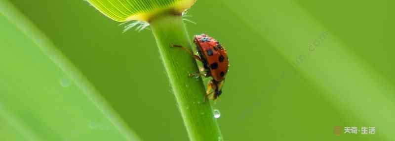 昆虫有什么 常见的昆虫种类100种 常见的昆虫有哪些