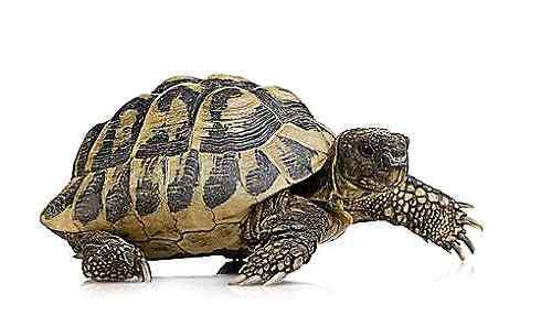 乌龟能活多久 乌龟为什么能活那么久 乌龟能活多少年
