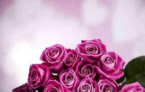 玫瑰花怎么保存 玫瑰花束如何保存能长时间不枯萎