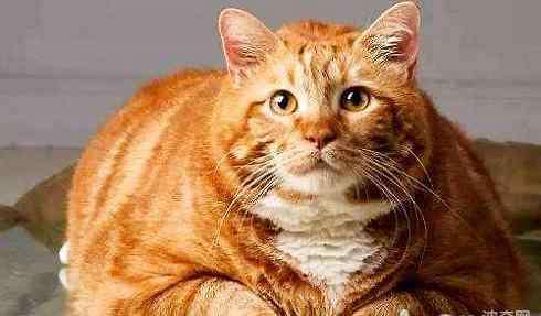 小橘猫一般多少钱一只 橘猫多少钱一只?橘猫价格盘点