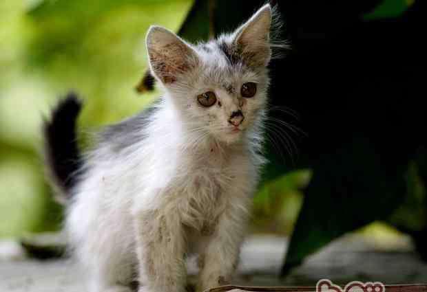 给流浪猫喂食禁忌 该如何喂养捡到的流浪猫