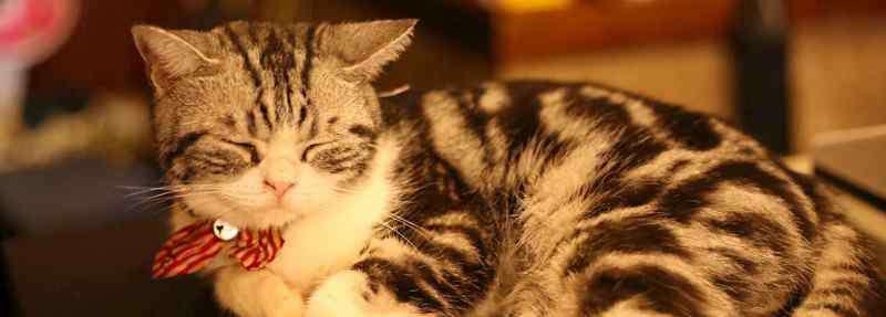 猫咪流眼泪 猫咪流眼泪怎么回事,怎么办才能缓解