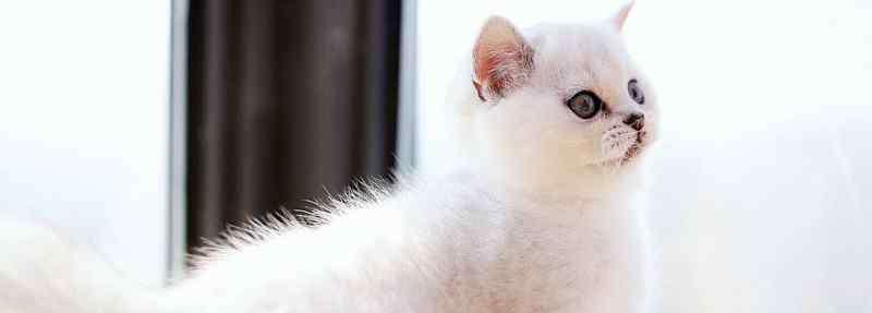猫多久打一次疫苗 猫疫苗多久打一次