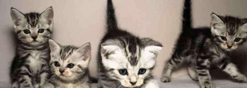 小猫多久会忘记猫妈妈 小猫多久可以离开母猫