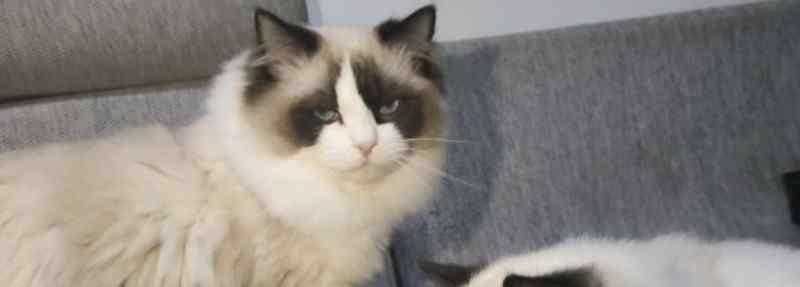 小猫多大可以吃猫粮 小猫多大可以吃猫粮