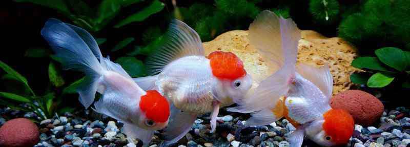 鱼嘴 鱼嘴巴烂了是怎么回事,鱼嘴烂了还能长好吗