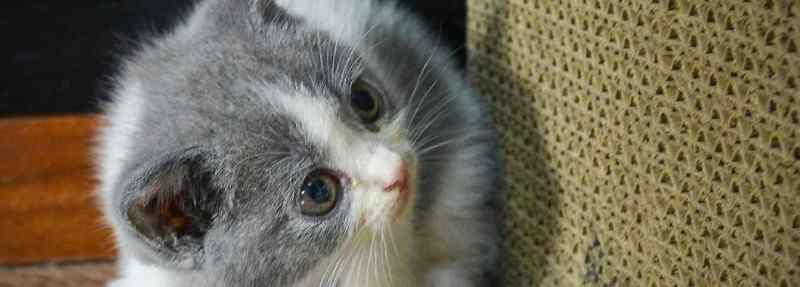 猫的寿命一年是多少岁 猫寿命一般多少年