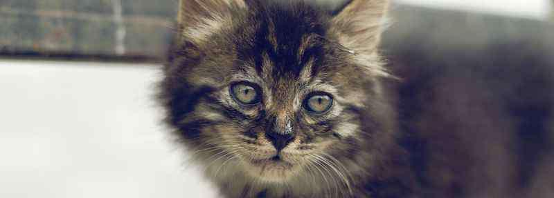 猫耳螨能自愈吗 猫耳螨传染人吗