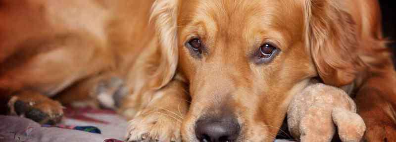 狗可以吃车厘子吗 狗吃了车厘子怎么办