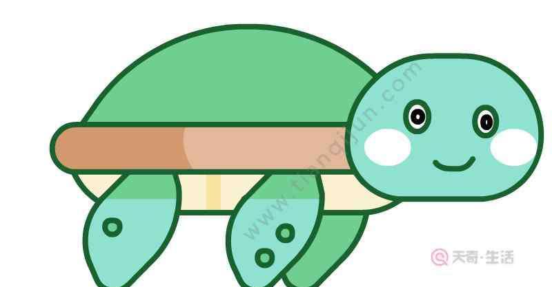 乌龟怎么画 乌龟简笔画画法  怎么画乌龟简笔画