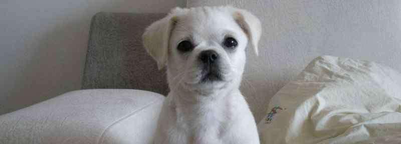 狗吐了是怎么回事 狗吐了是怎么回事