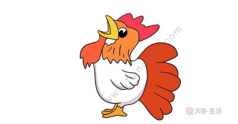 公鸡怎么画 打鸣的公鸡简笔画 打鸣的公鸡怎么画