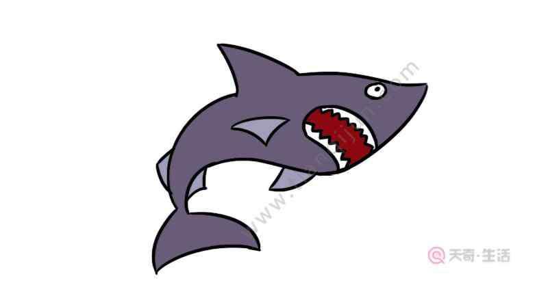 大鲨鱼简画 大鲨鱼简笔画