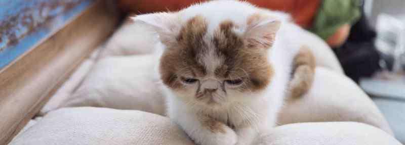 猫突然粘人预示什么 猫突然粘人预示什么