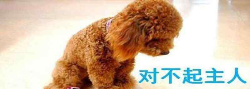 狗狗认错的表现 狗狗向你道歉的表现